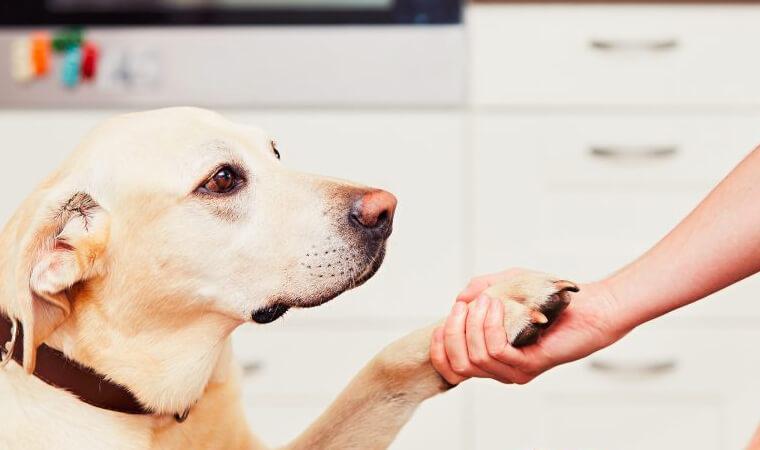 ペット飼育ができる物件を経営するメリット・デメリット
