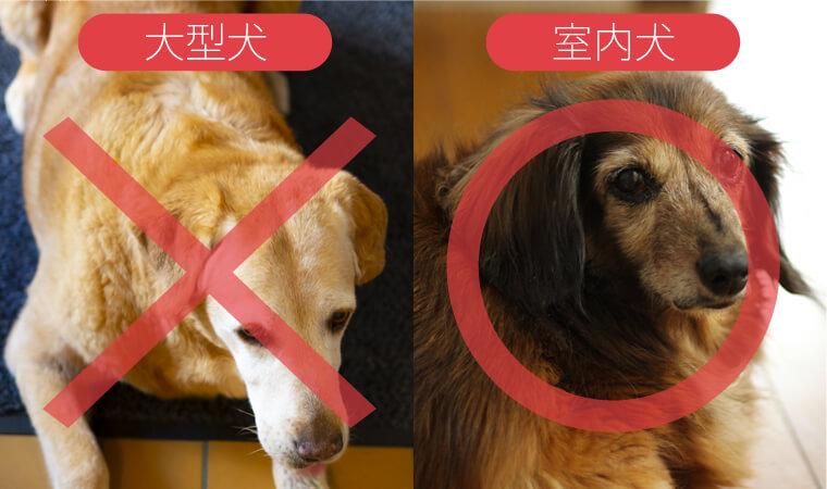 「大型犬は禁止」や「室内犬に限り◯頭まで可能」